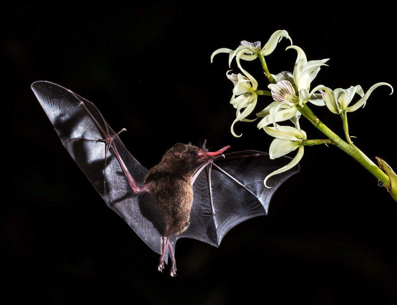 Not All Bats are Blind