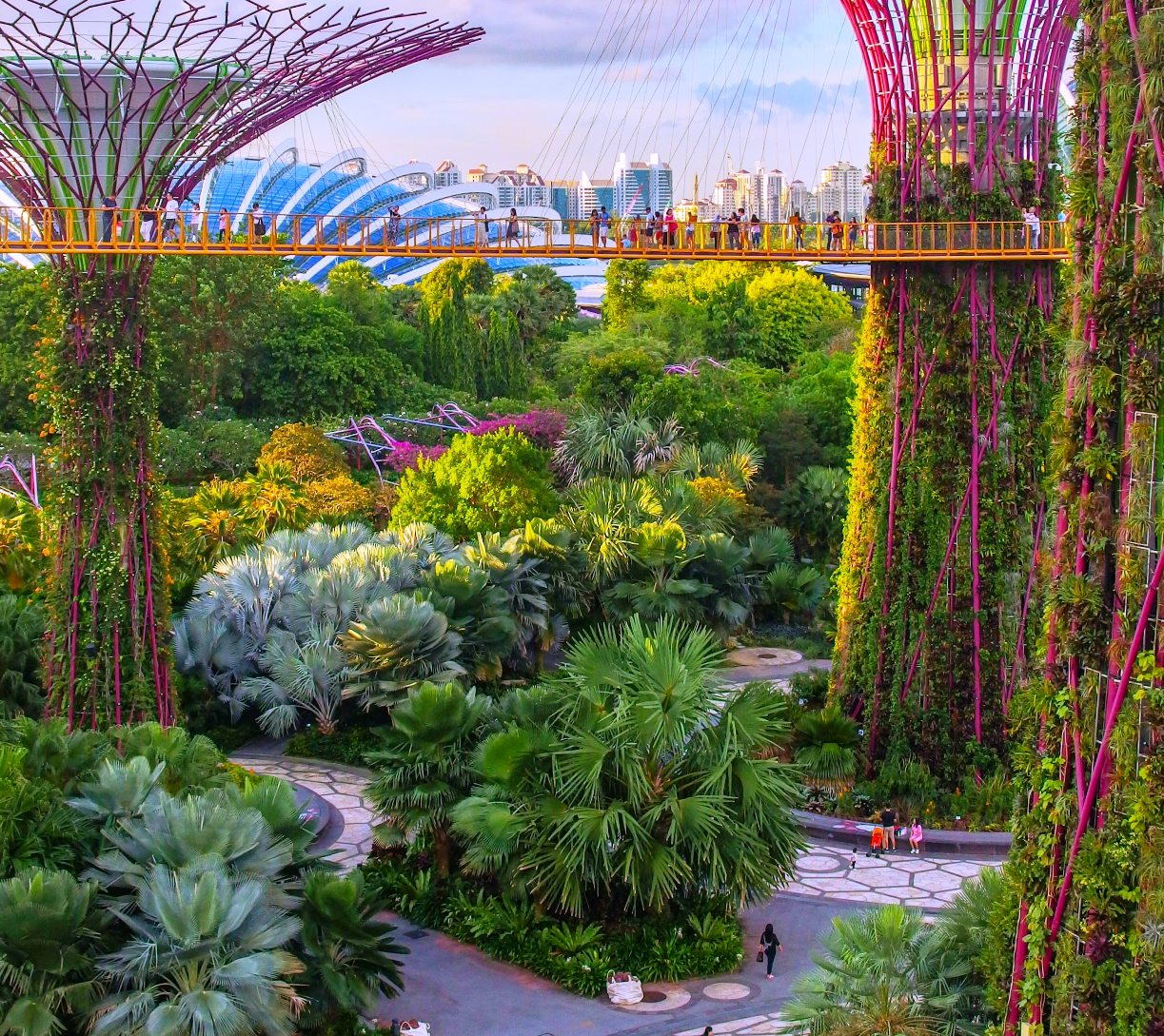 trees in singapore