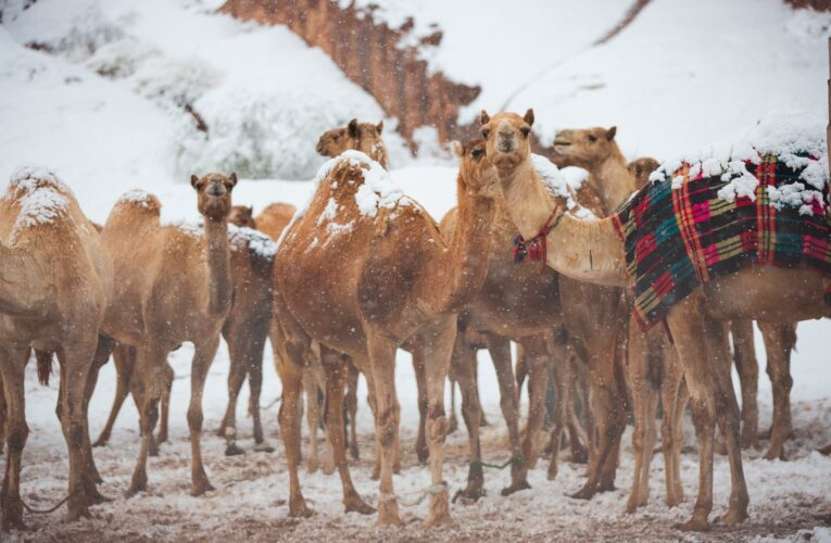 Why it's snowing heavily in West Asia, Saudi Arabia?