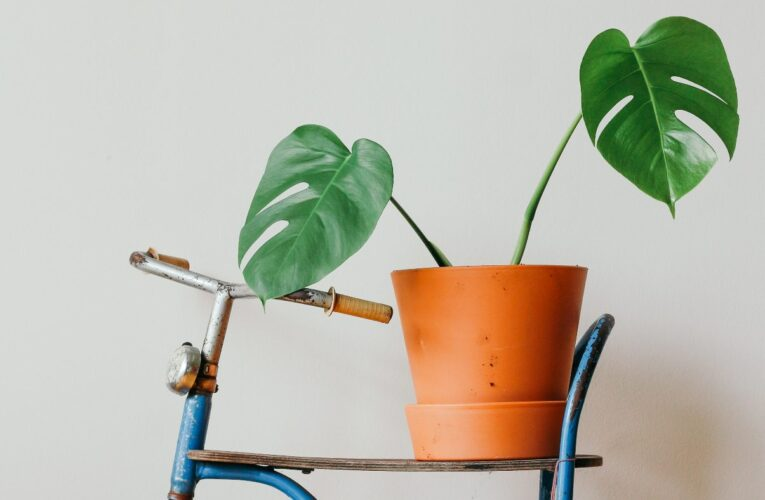 Best Indoor Plants To Get Rid Of Toxins and Chemicals